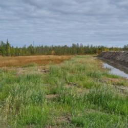 Результат биологической рекультивации нефтезагрязненных земель